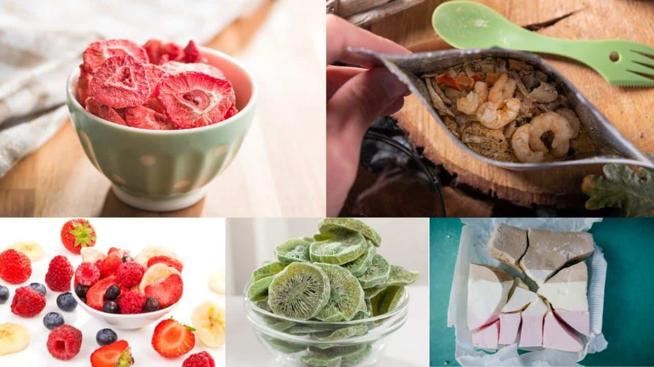 What foods are best to freeze dry
